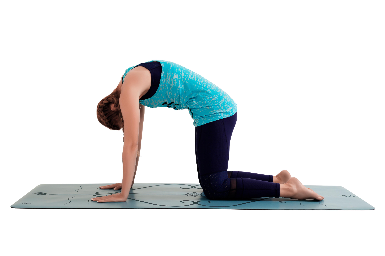 йога для позвоночника с картинками мне